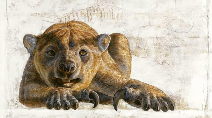 New species of ´marsupial lion´ found in Australia