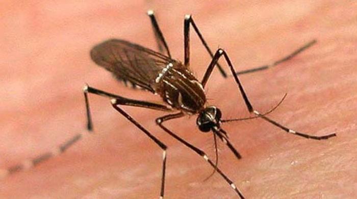 Dengue has claimed 69 lives in KP so far: WHO