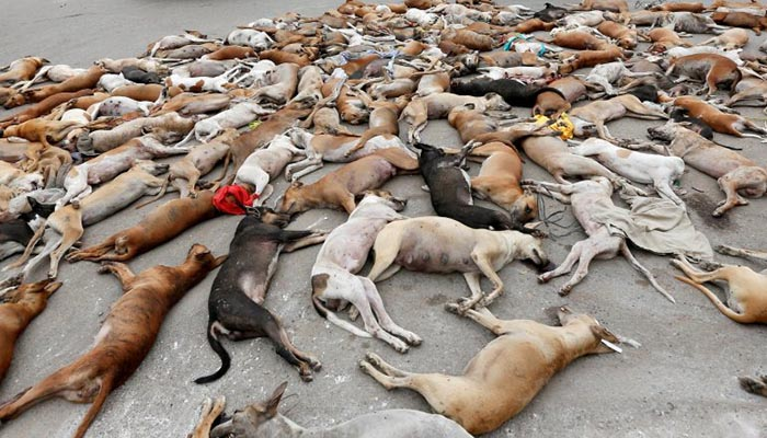 Animals Killed For Food In Uk