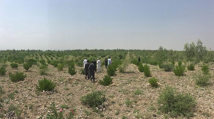 Resolution submitted in KP Assembly seeking inquiry into 'Billion Tree Tsunami'
