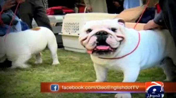 District administration organises dog show in Gujranwala