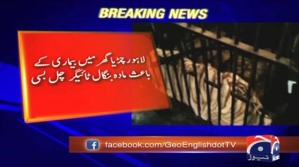 12-year-old Bengali tigress dies at Lahore zoo