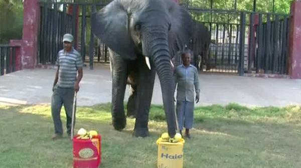 Safari Park's Malika predicts PSL3 winner