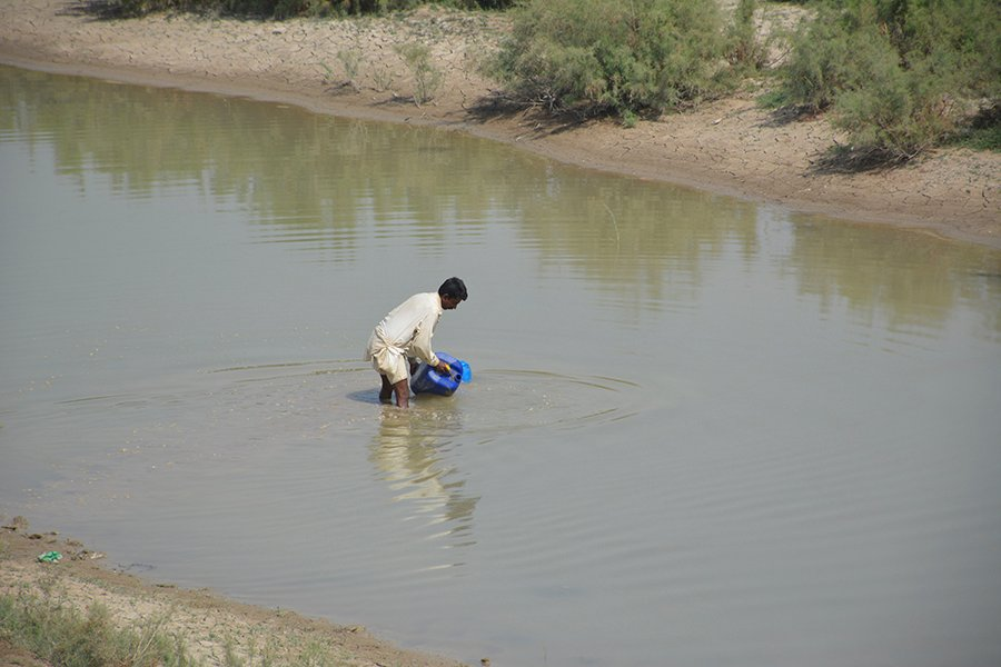 A local resident is filling jerry cane from a rainwater pond near Manchar Lake.  Photos by Amar Guriro