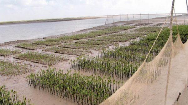 Pakistan sets world record by planting million mangroves in a day
