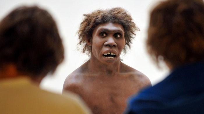Scientists set eyes on Neanderthal ´brain´