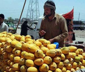 Mango season is here and Pakistanis can't contain their excitement