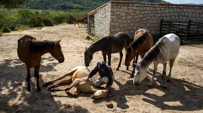 Spain horse whisperer's animals mirror stress sufferers' state of mind