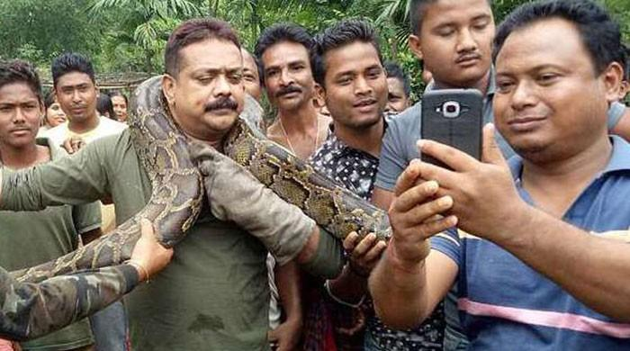 Python chokes man as he poses for selfie