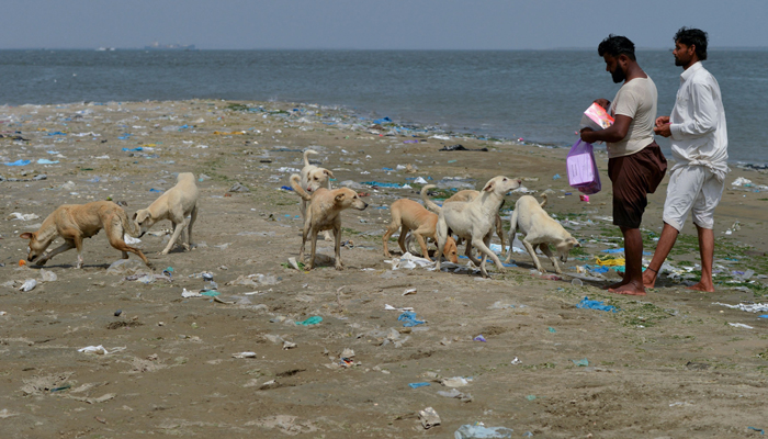 Karachi fishermen feed islands full of stray dogs | Pakistan