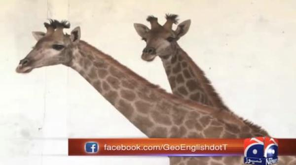 Lahore zoo gets new giraffe