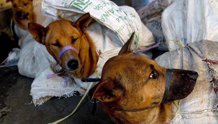 Indonesia to ban dog meat consumption