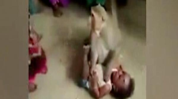 Monkey tries to take away minor child in India