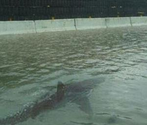 Fake News: Sharks in streets as Hurricane Florence hits North Carolina