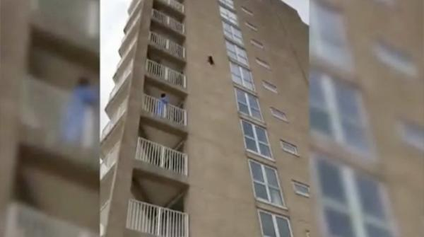 Raccoon survives nine-storey leap from building