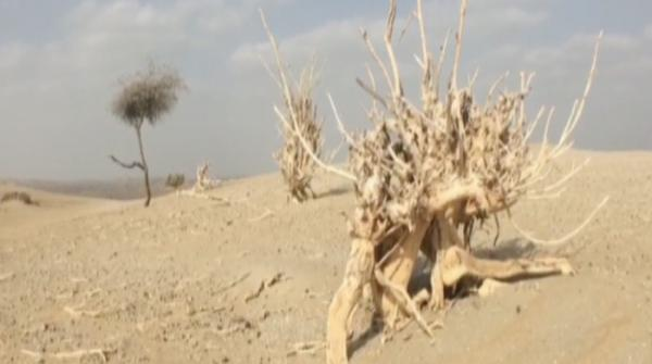 Sindh wildlife at risk due to drought