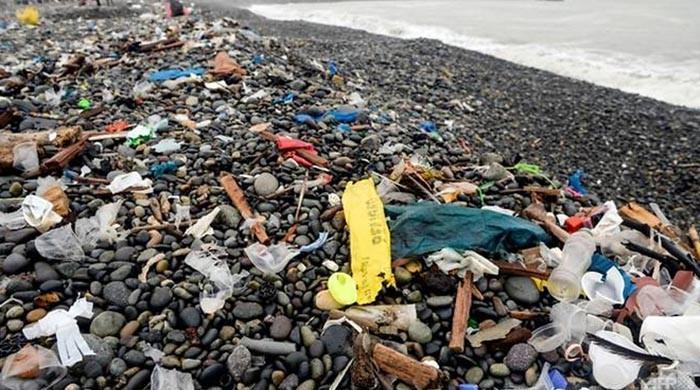 Plastics have entered human food chain, study shows
