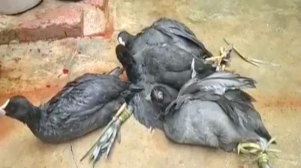 Illegal hunting of rare birds in coastal Sindh