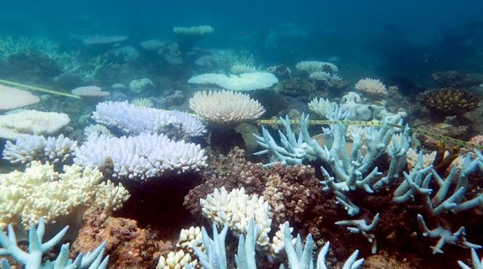 Biggest coral reseeding project launches on Great Barrier Reef