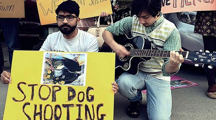 Can these animal rights activists win their fight against cruel killing of stray dogs?