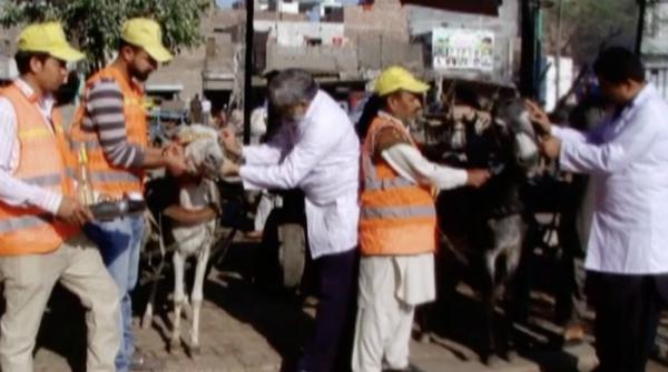 Clinic set-up in Lahore to provide free treatment to donkeys