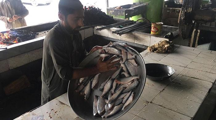 Khyber Pakhtunkhwa's Sher Mahi fish is dying out