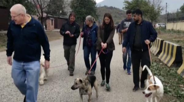 Walk held at Diplomatic Enclave to raise awareness for adoption of stray dogs