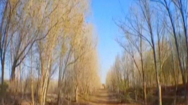 Forest in Badin disappearing fast