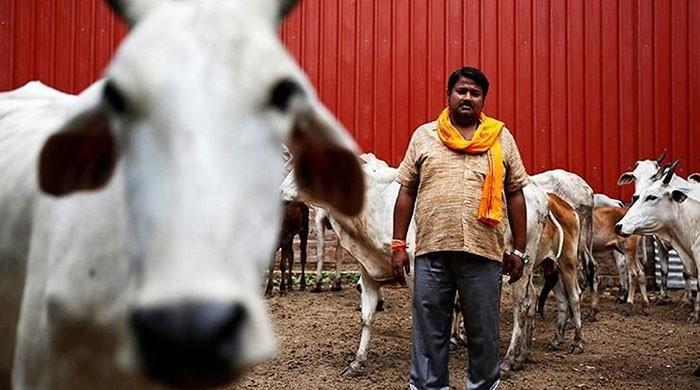 44 killed in cow-related violence in India, BJP complicit: HRW report