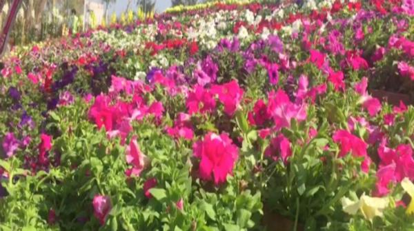 Flowers colour the landscape at Lodhran exhibition