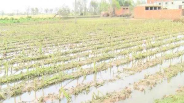 Hailstorm destroys crops in Multan