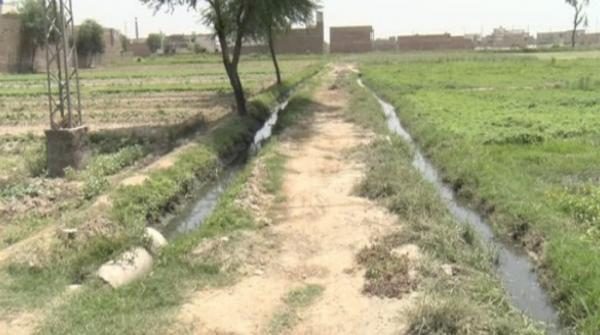 Vegetables being grown with sewerage water in Multan