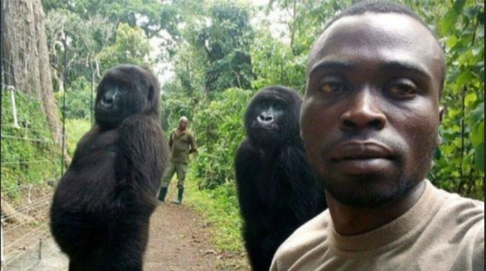 Picture perfect — Congo ranger's gorilla selfie goes viral
