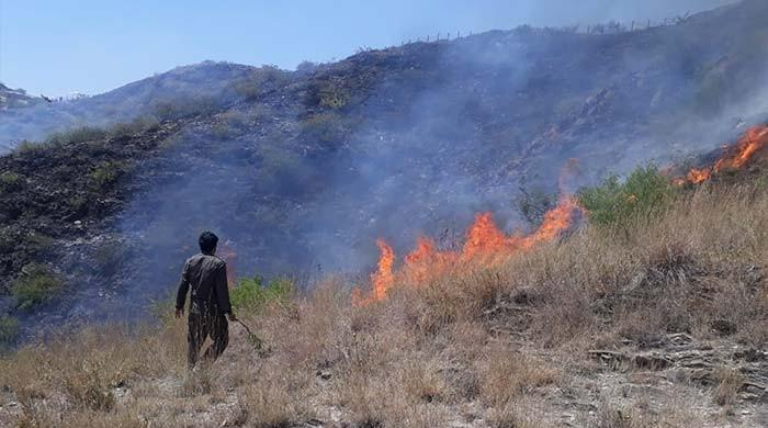 Over 100,000 trees burnt down in Khyber Pakhtunkhwa wildfires: officials