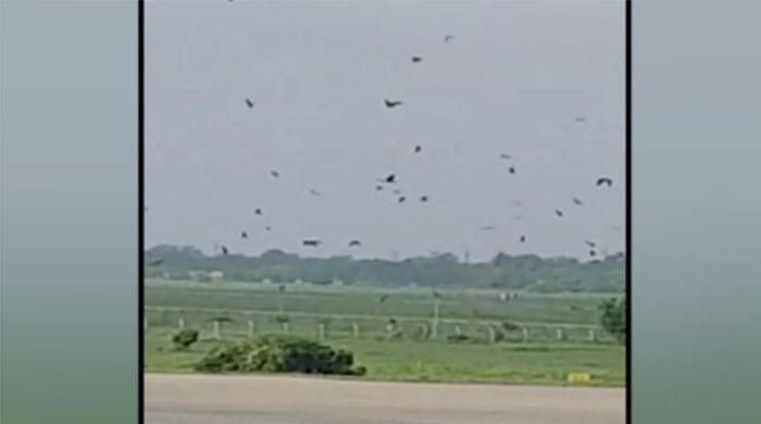 Flight operations disrupted at Lahore airport due to huge flock of birds
