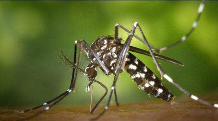 186 dengue cases reported in Karachi in last 20 days