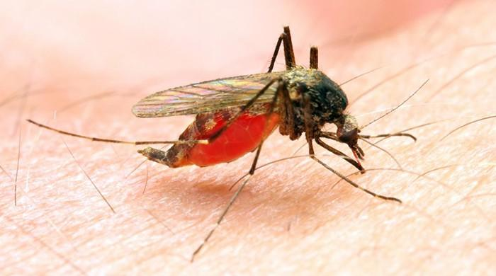 WHO urges investment drive as malaria fight stalls