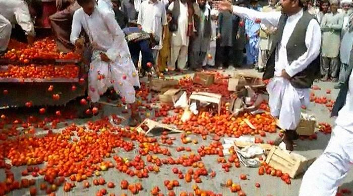 Qila Saifullah farmers take a leaf from Spain's La Tomatina festival to stage unique protest