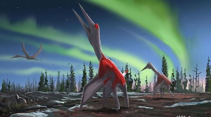 Largest flying animal in history identified: study