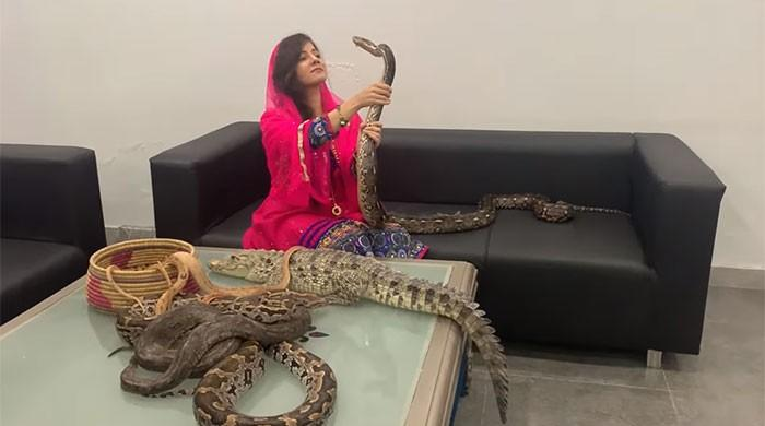 Rabi Pirzada sent challan for keeping wild animals as pets