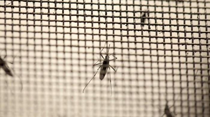 Dengue cases rise to 4,115 in Sindh, death toll at 14