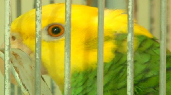 Karachi- ICU and nursery for parrots