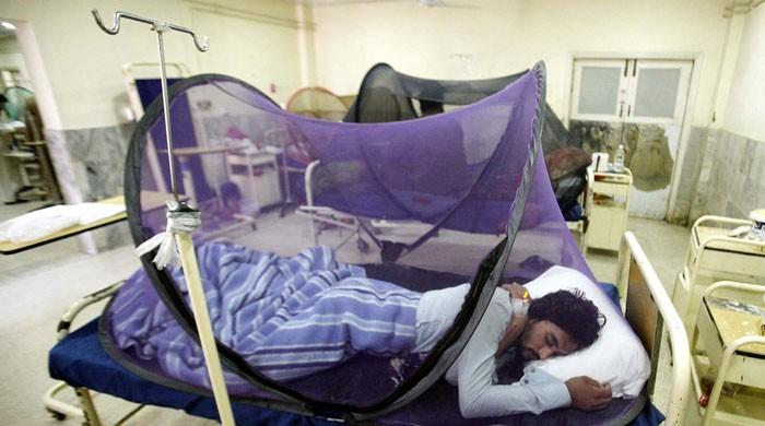 50,000 tested positive for dengue across Pakistan, 250 dead, claim health officials
