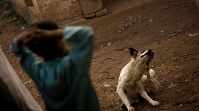 Dog that bit 25 people in Karachi overnight found dead