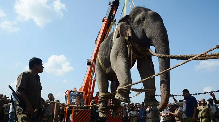 Indian elephant named Osama bin Laden gets a job after being renamed 'Krishna'