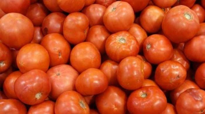 Armed guards protect tomato farms from thieves as prices skyrocket