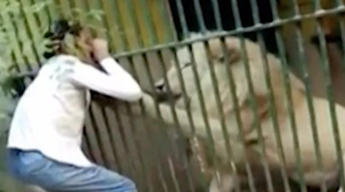Lion severely injures zoo keeper in Karachi