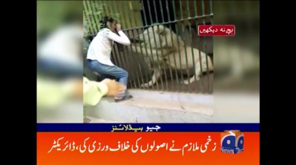 کراچی چڑیا گھرمیں کھانا دینے والے پر شیر کا حمل