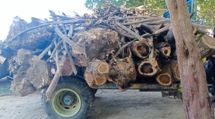 Section 144 imposed in Sindh's Sanghar district to stop illegal tree loggers