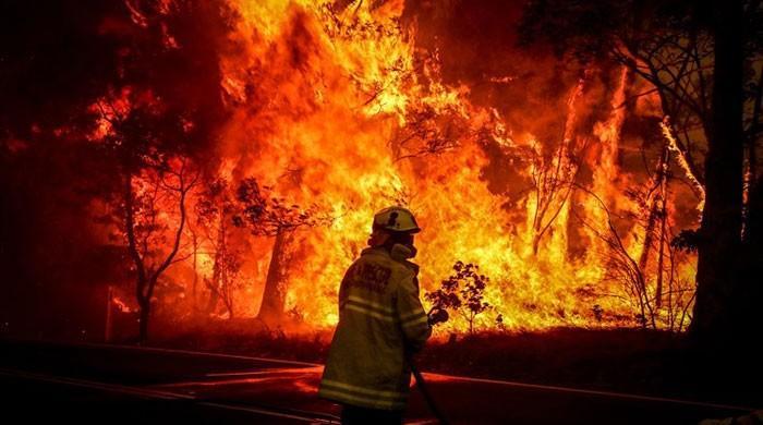 Australia launches inquiry into causes of bushfires